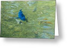 Parrotfish On A Swim Greeting Card by John M Bailey
