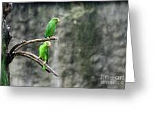 Parrots In The Rain Greeting Card