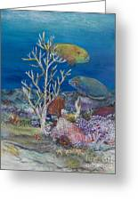 Parrots Of The Reef Greeting Card