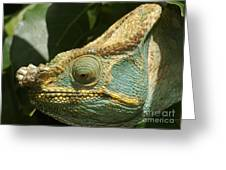 Parsons Chameleon From Madagascar 12 Greeting Card
