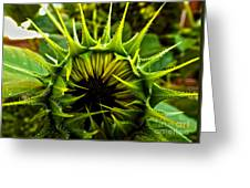 Partial Eclipse Of The Sunflower Greeting Card