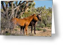 Partners - Wild Horses Greeting Card