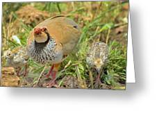 Partridge Greeting Card