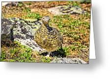 Partridge 1 Greeting Card