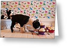 Party On Puppy Greeting Card