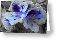 Pasion Blue Greeting Card