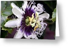 Pasionfruit Flower Greeting Card by Jeffrey Lee