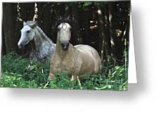 Paso Fino Mares Pay Attention Greeting Card