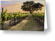 Paso Vineyard  Greeting Card