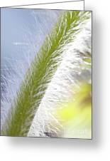 Pasqueflower Stem  Greeting Card