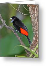 Passerini's Tanager Greeting Card