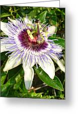 Passiflora Close Up With Garden Background  Greeting Card