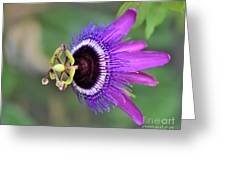 Passiflora Lavender Lady Greeting Card