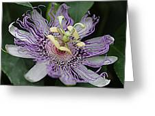 Passion Beauty Greeting Card by Sarah E Kohara