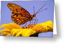 Passion Butterfly On The Mexican Sunflower Greeting Card