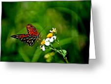Passion Butterfly Painted Greeting Card