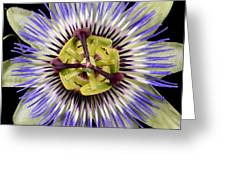 Passion Flower-0008 Greeting Card