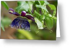 Passion Flower - Ruby Glow Greeting Card