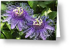 Passion Flowers Greeting Card