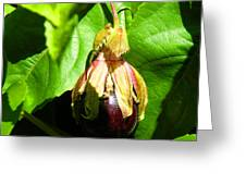 Passion Fruit 10-18-13 By Julianne Felton Greeting Card