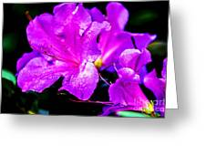 Passion Of Purple Greeting Card