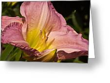 Passion Pink Lilly Greeting Card