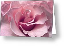 Passion Pink Rose Flower Greeting Card