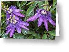 Passion Vine Flower Rain Drops Greeting Card