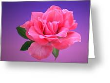 Passionate Pink Greeting Card