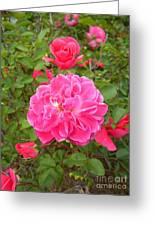 Passionate Pink Springtime Greeting Card