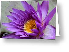 Passionate Purple Water Lily Greeting Card
