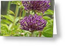 Passionately Purple Greeting Card