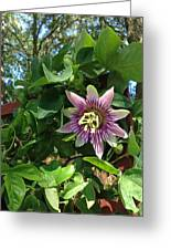 Passion Flower 3 Greeting Card