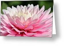 Pastel Awakening Greeting Card