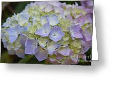 Pastel Blue Hydrangea Greeting Card