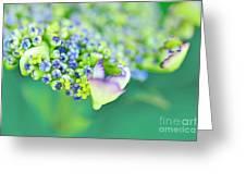 Pastel Buds Greeting Card