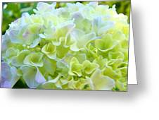 Pastel Floral Hydrangea Flowers Art Baslee Troutman Greeting Card