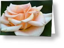 Pastel Peach Rose Greeting Card