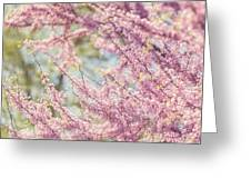 Pastel Pink Flowers Of Redbud Tree In Springtime  Greeting Card by Lisa Russo