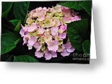 Pastel Pink Hydrangea Greeting Card