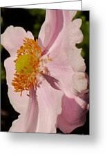 Pastel Pink Mallow Greeting Card