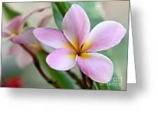 Pastel Pink Plumeria Greeting Card