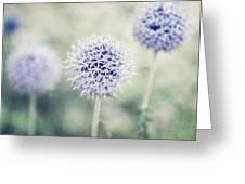 Pastel Purple Allium Bulbs Greeting Card