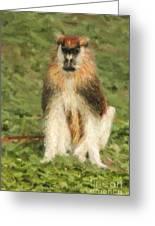 Patas Monkey Erythrocebus Patas  Greeting Card