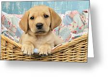 Patchwork Puppy Dp793 Greeting Card by Greg Cuddiford