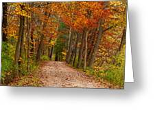 Path In A Fall Woods Greeting Card