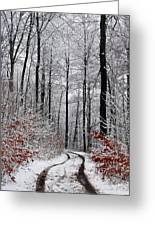 Path In A Forest In Winter In The Countryside  In Denmark Greeting Card