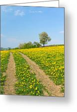Path In Dandelion Meadow  Greeting Card