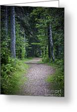 Path In Dark Forest Greeting Card by Elena Elisseeva