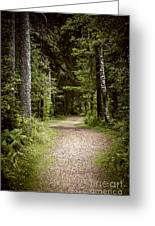 Path In Old Forest Greeting Card
